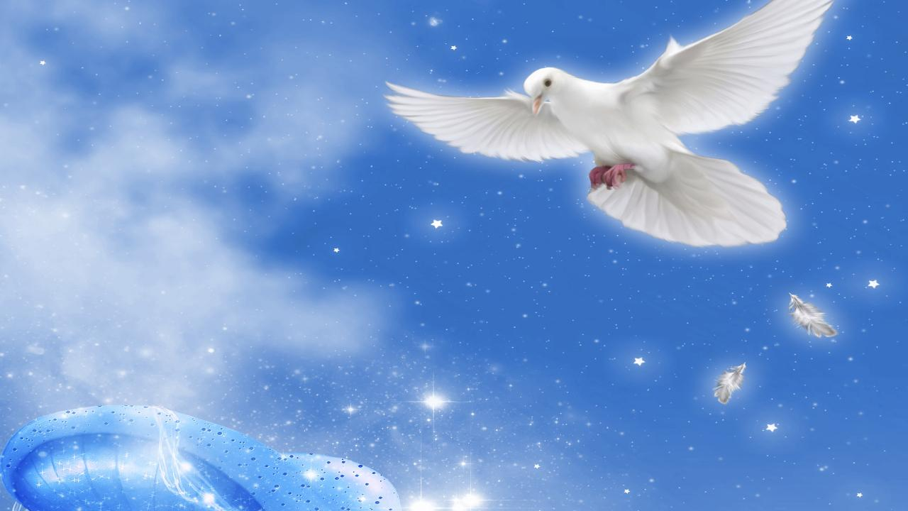 FREE ANGELS LIVE WALLPAPER HD   screenshot 1280x720