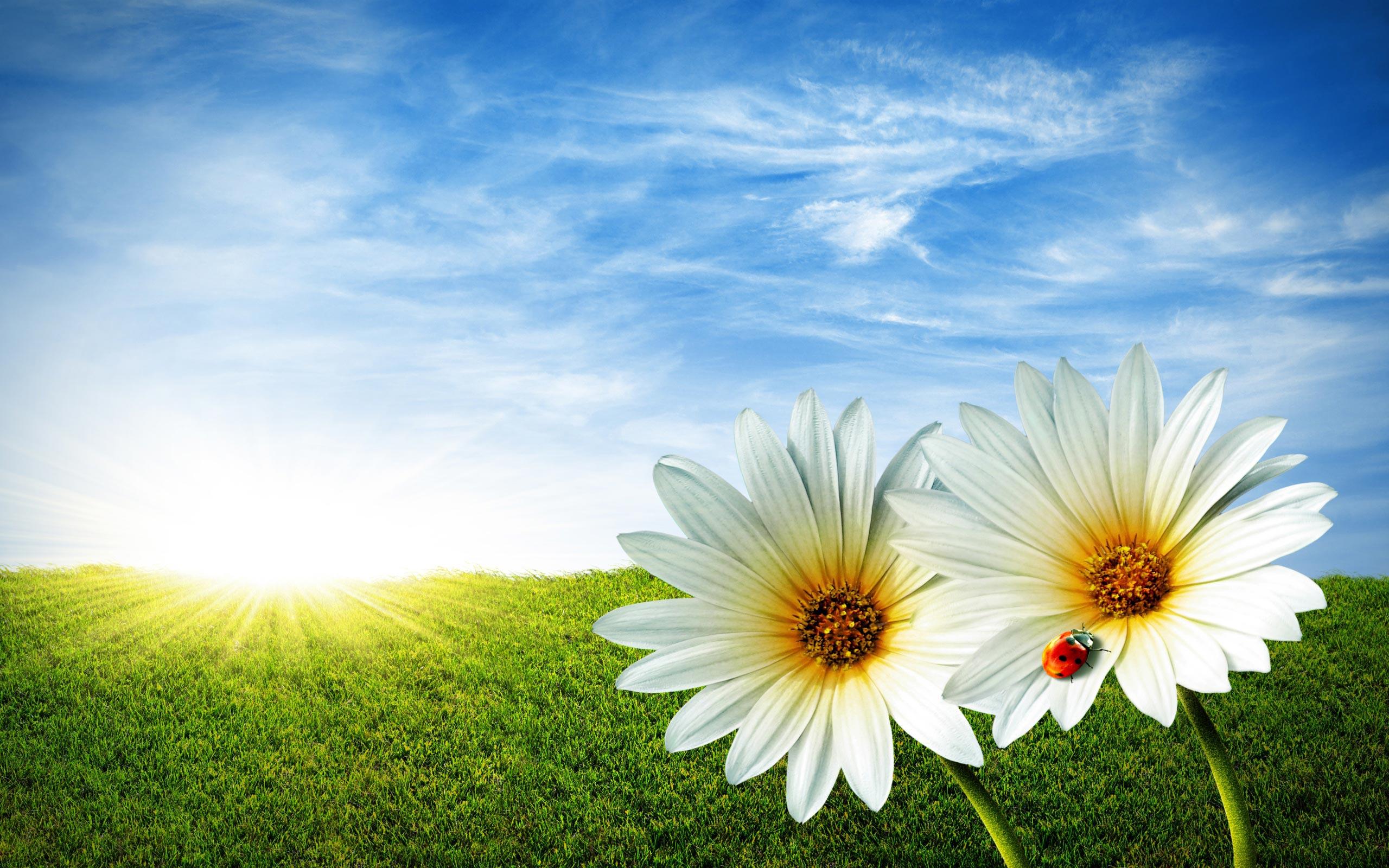 Spring Backgrounds Wallpaper ImageBankbiz 2560x1600