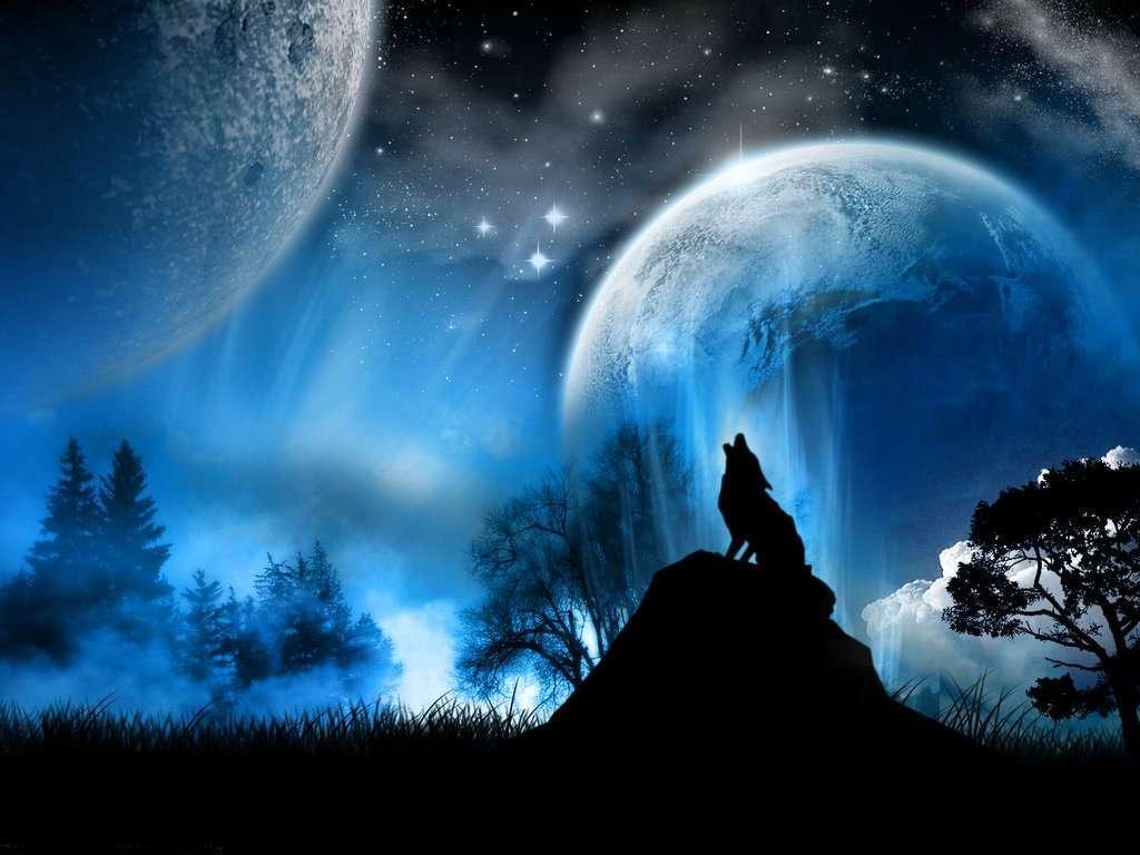 Miscellaneous Digital Art Wolf Wallpaper Wallpaper ME 1024x768