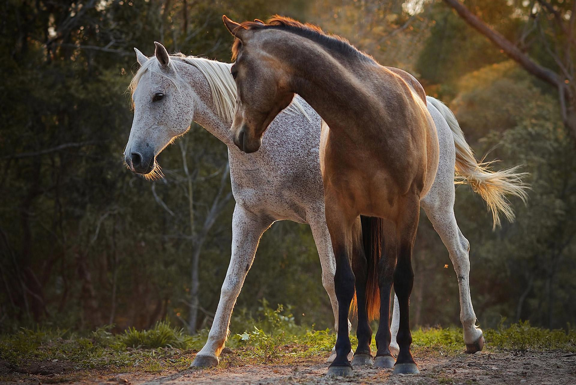 Фото серая лошадь