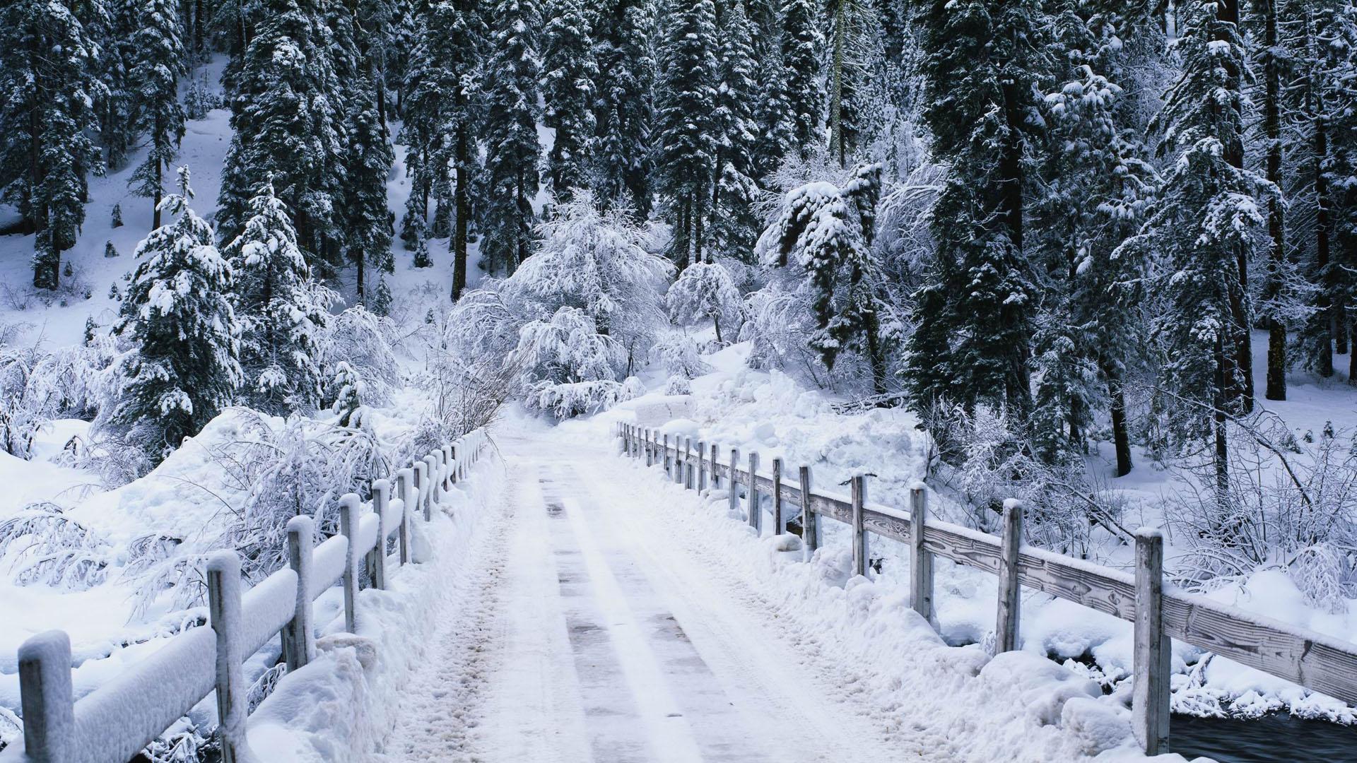 Snowy bridge 1920 x 1080 Forest Photography MIRIADNACOM 1920x1080