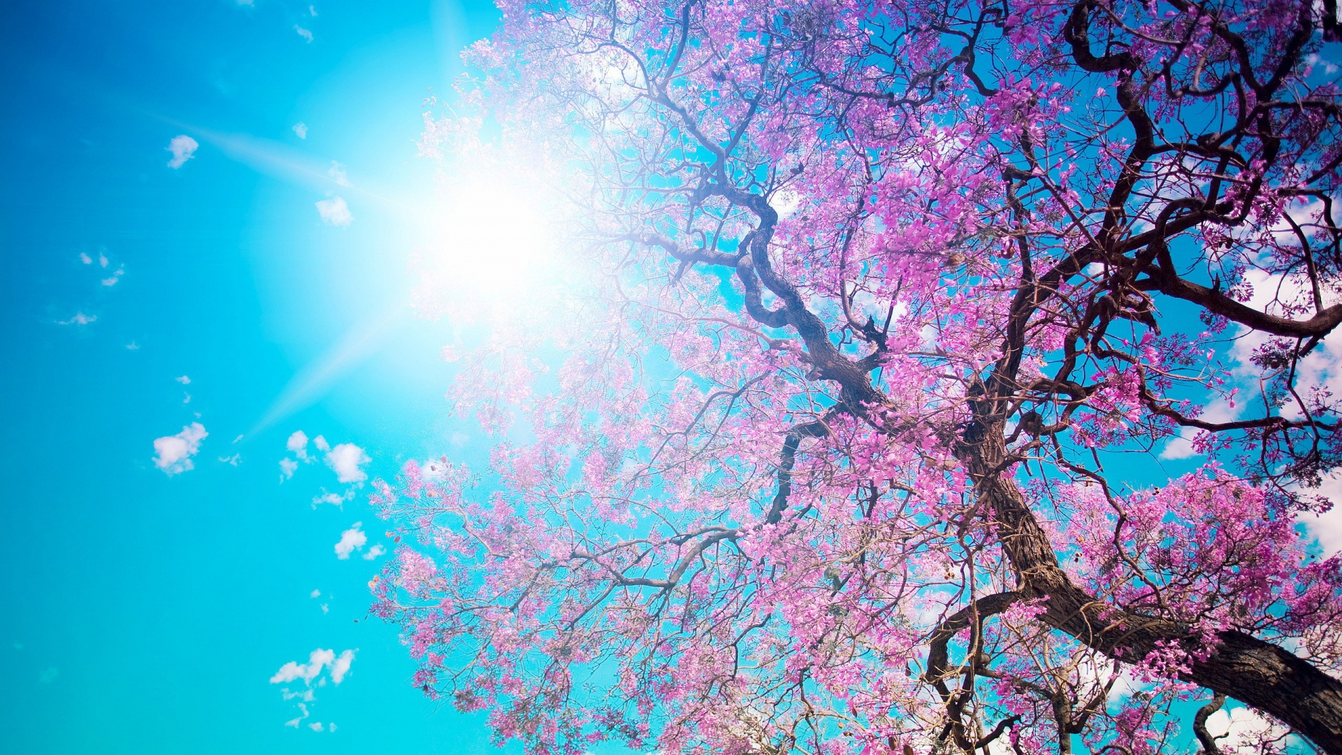 Spring Wallpapers Best Wallpapers 1920x1080