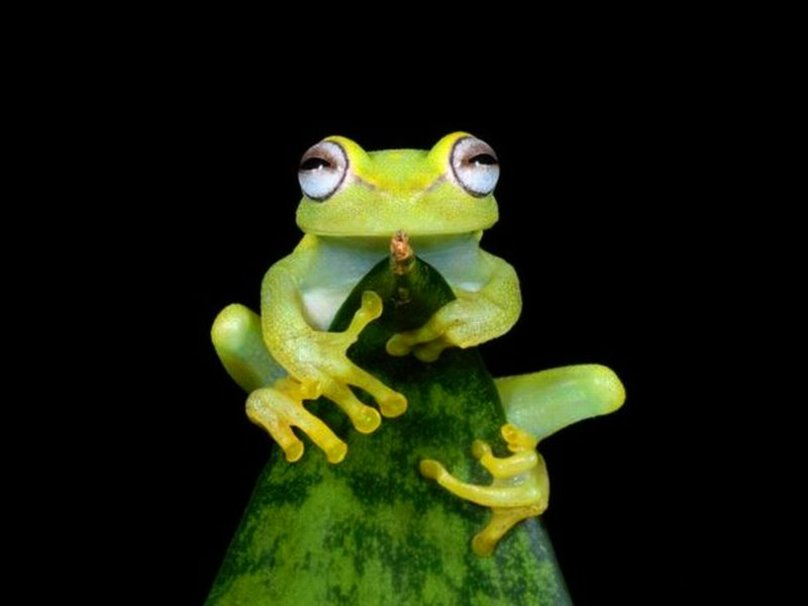 Cute Frog wallpaper   ForWallpapercom 808x606