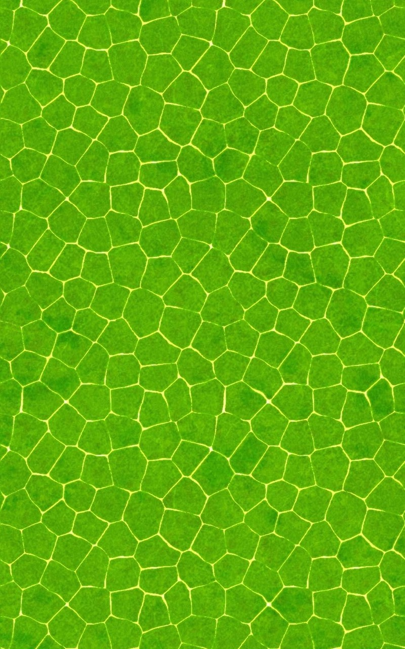 Crocodile skin pattern Mobile Wallpaper 4647 800x1280