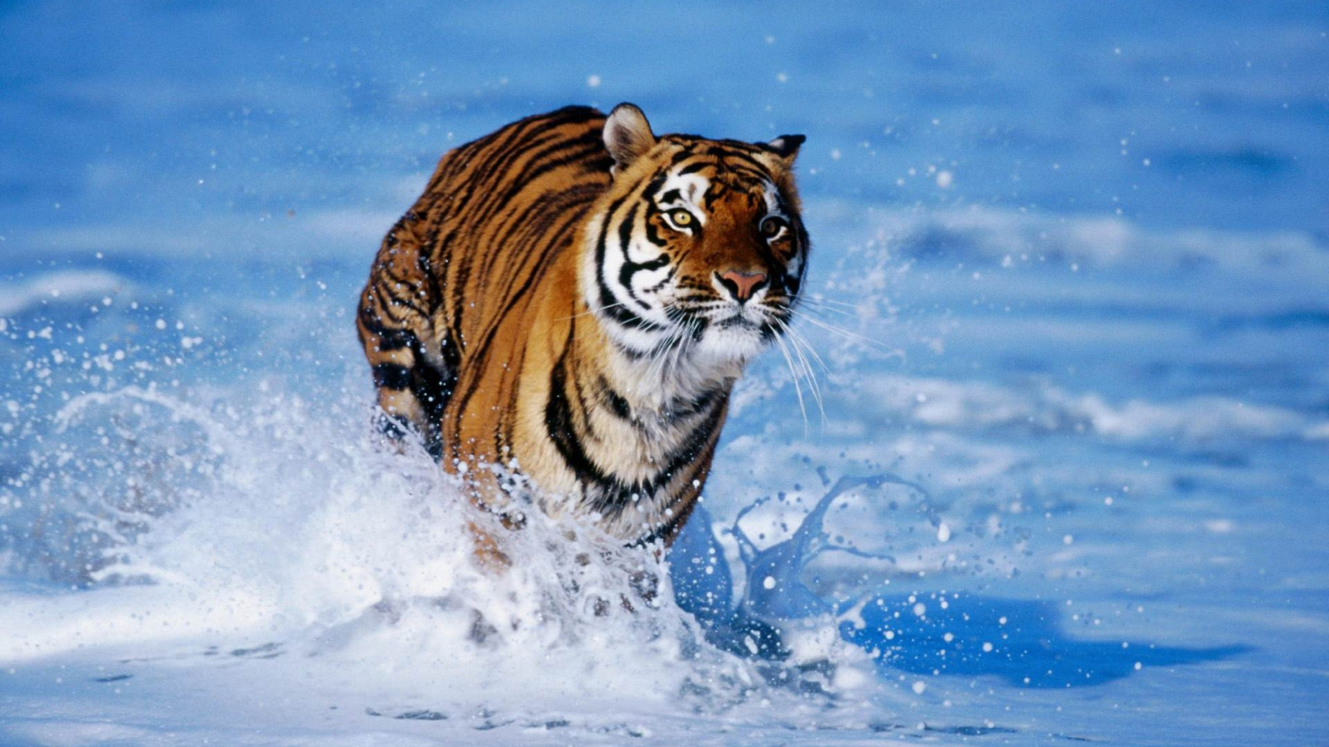 Wild Animal Wallpaper wallpaper wallpaper hd background desktop 1920x1080