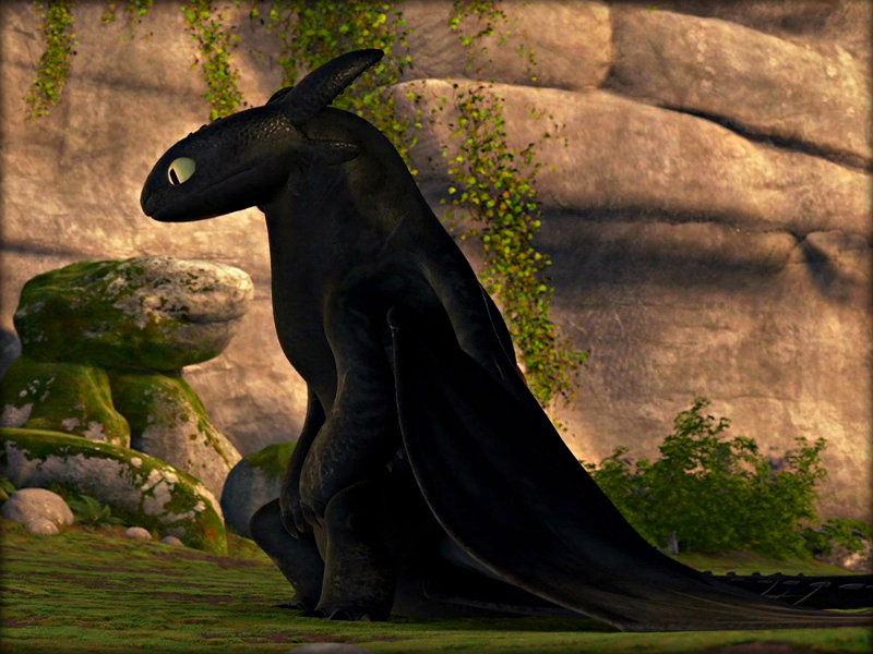 Toothless   Toothless the Dragon Wallpaper 33059181 800x600