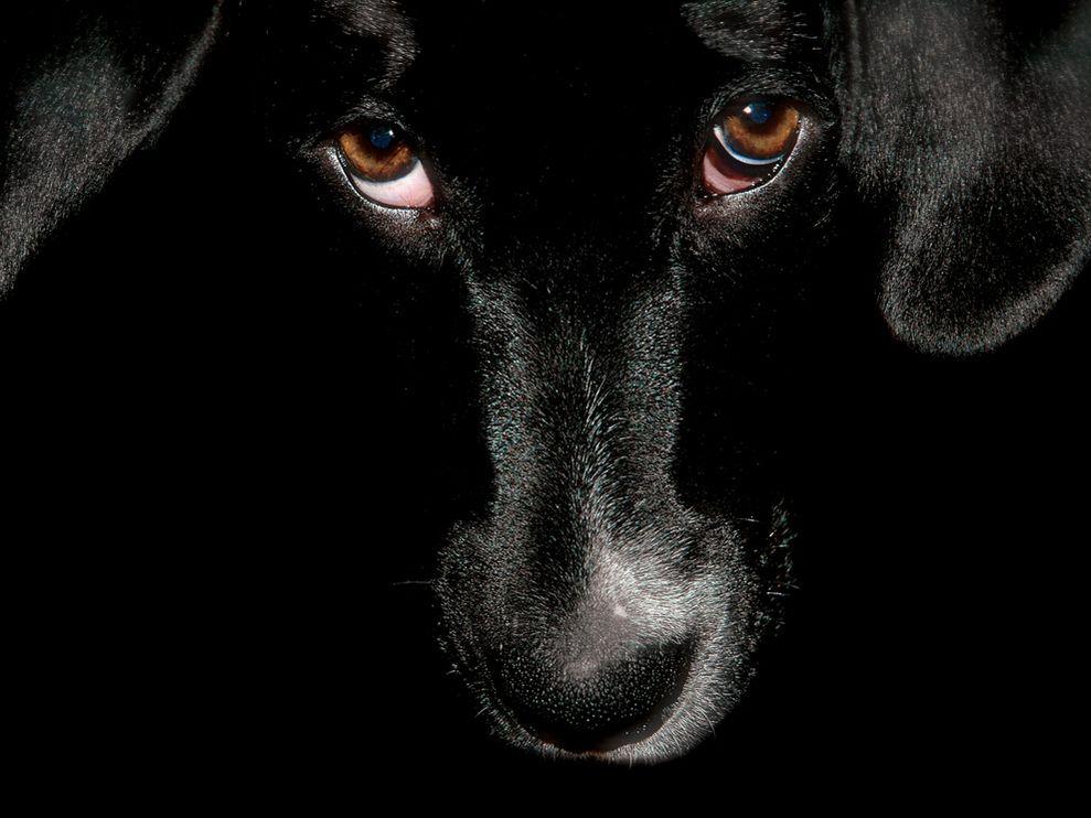 Unique Animals blogs Black Dog Wallpapers for Desktop 989x742