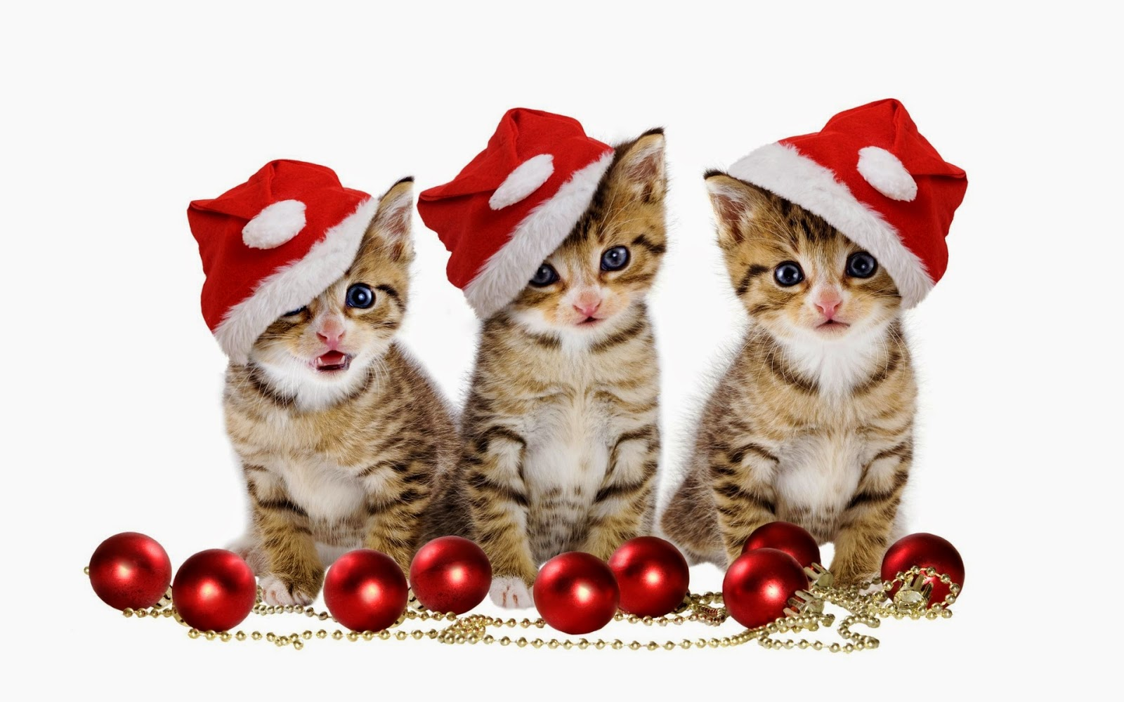 Lovely Cute Kittens And Puppies Christmas 1600x1000