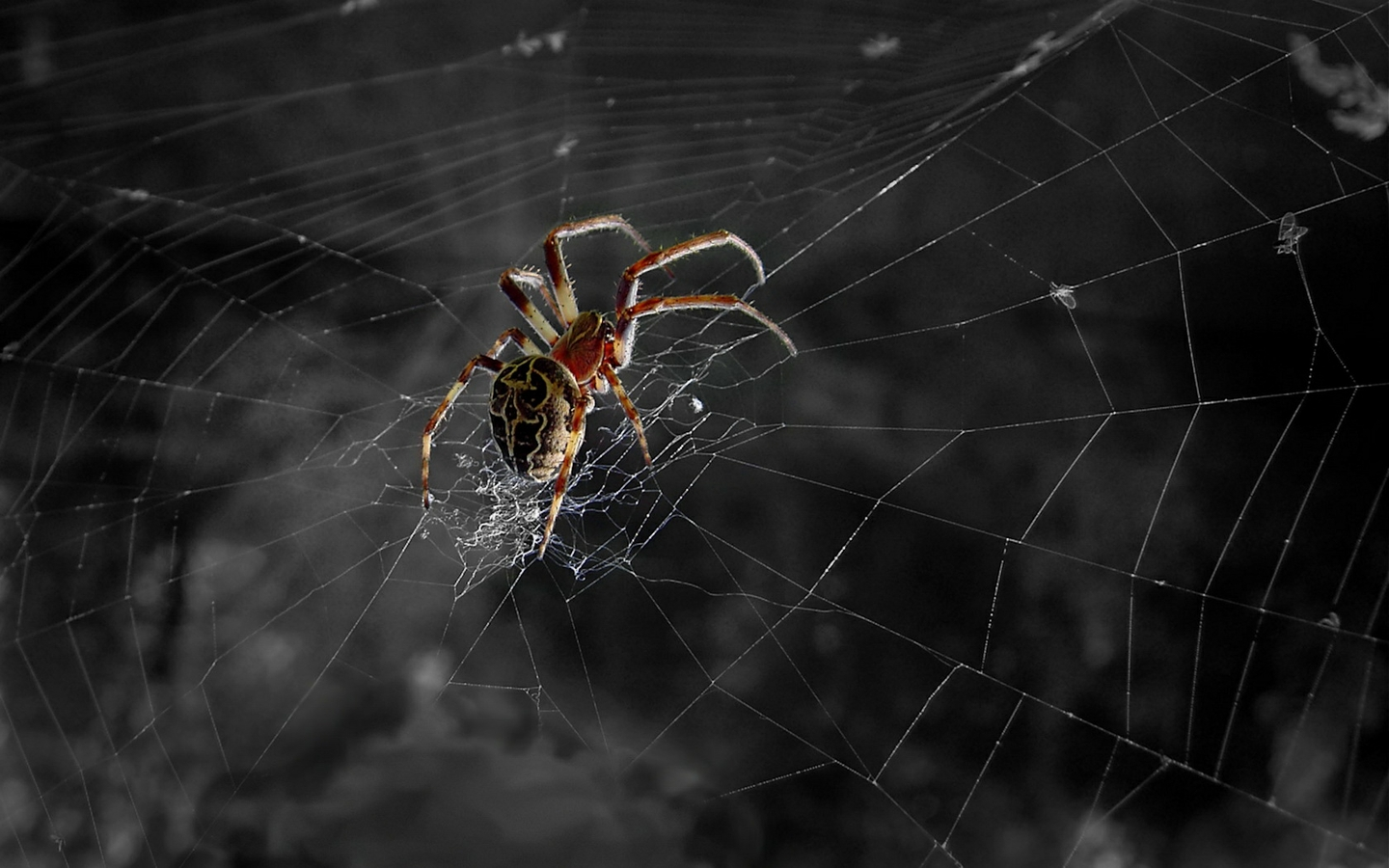 Spider Web Wallpaper for PC Full HD Pictures 1440x900
