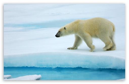 Polar Bear HD wallpaper for Standard 43 54 Fullscreen UXGA XGA SVGA 510x330