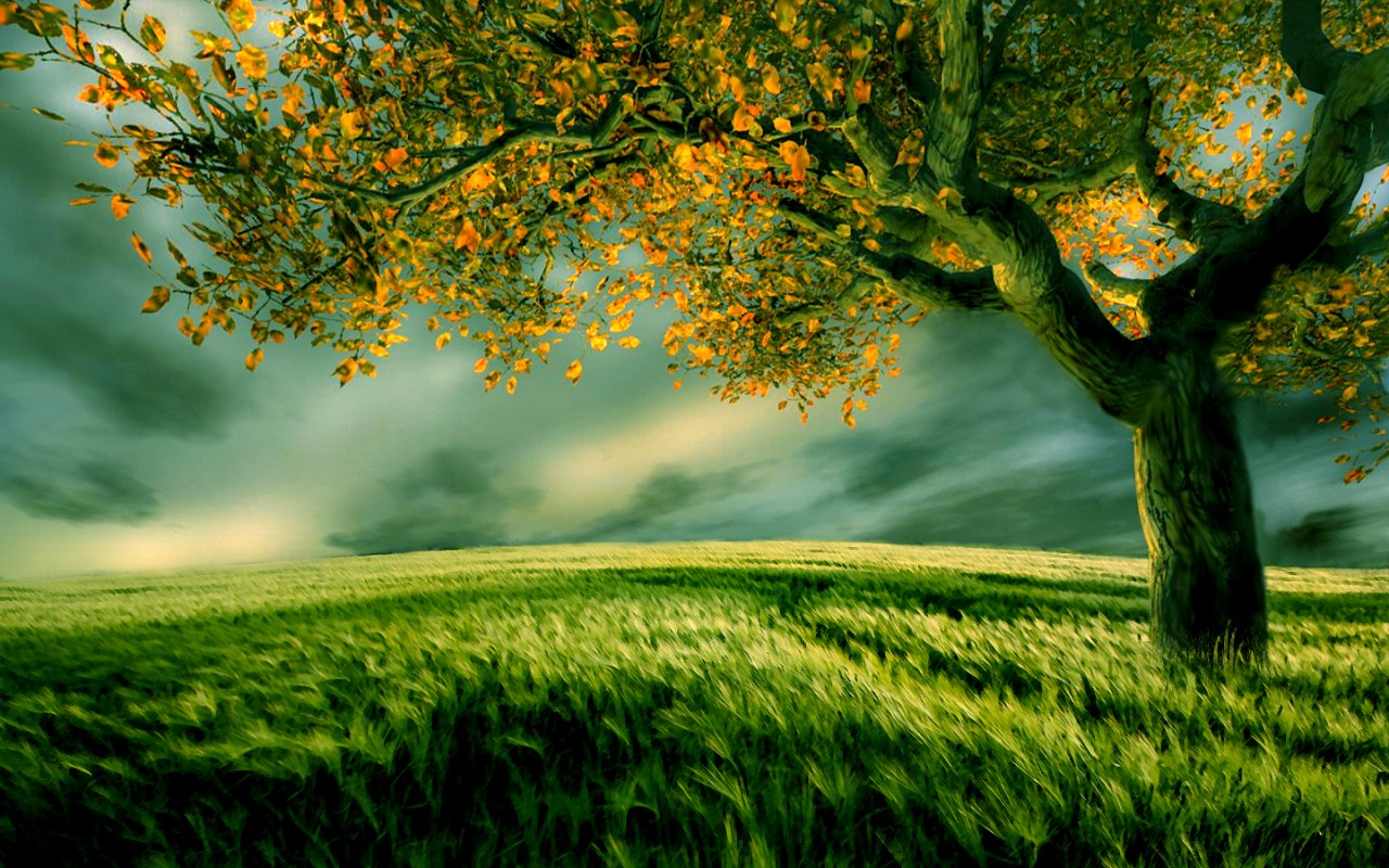 new nature 12 wallpaper you are viewing the nature wallpaper named new ...