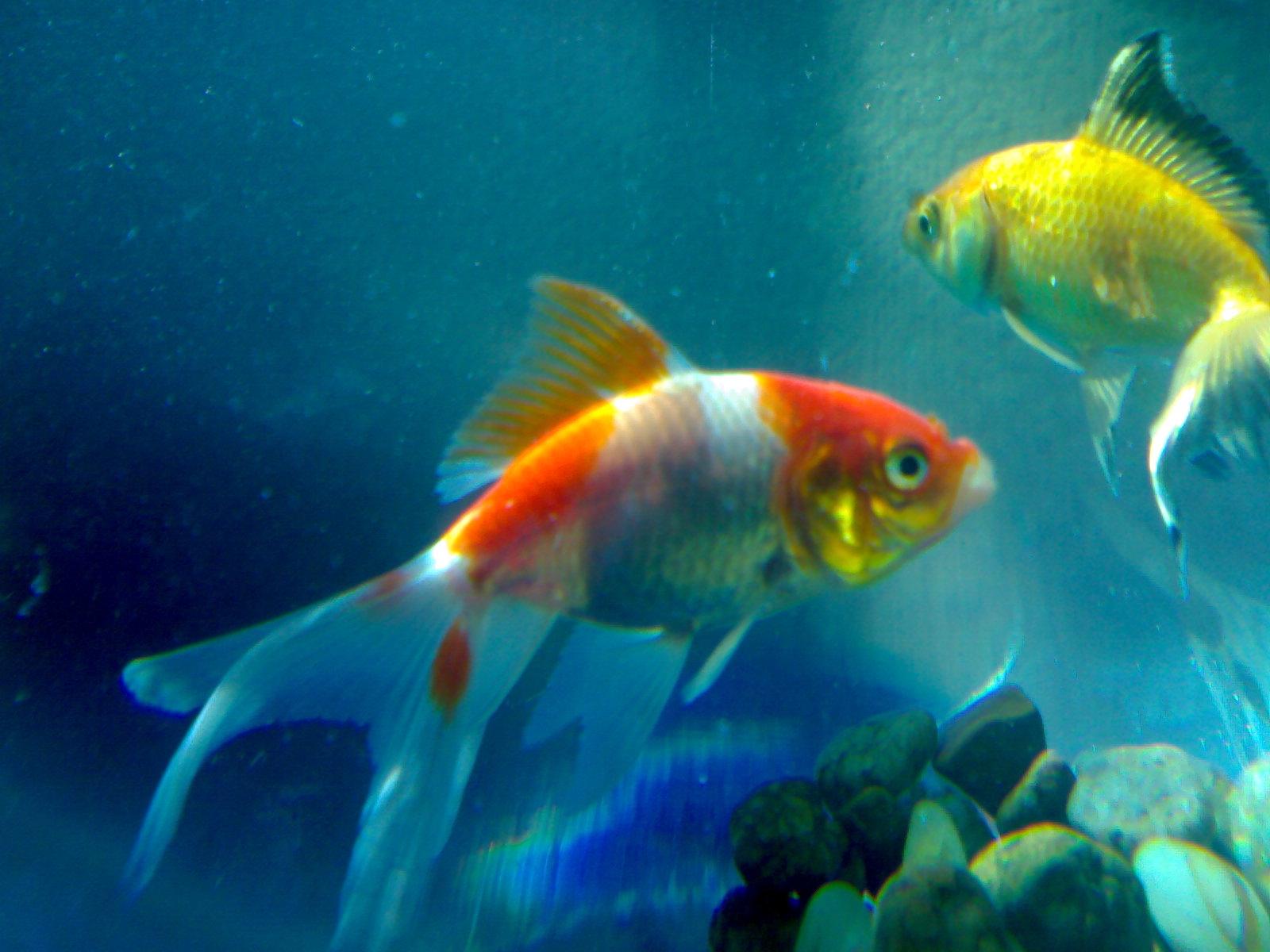 1600x1200 evil fish desktop - photo #14