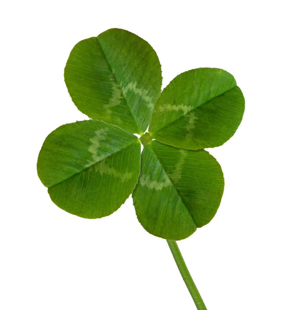Four Leaf Clover Wallpapers 1024x1036
