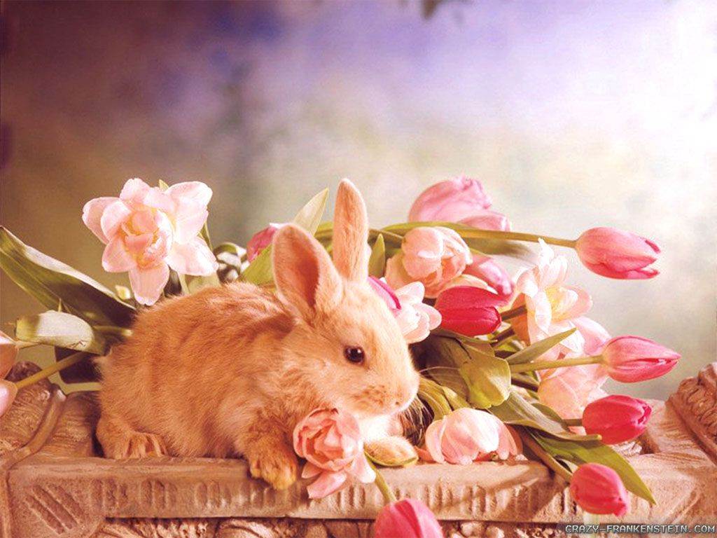 Happy and Cute Easter wallpaper HD Wallpapers 1024x768