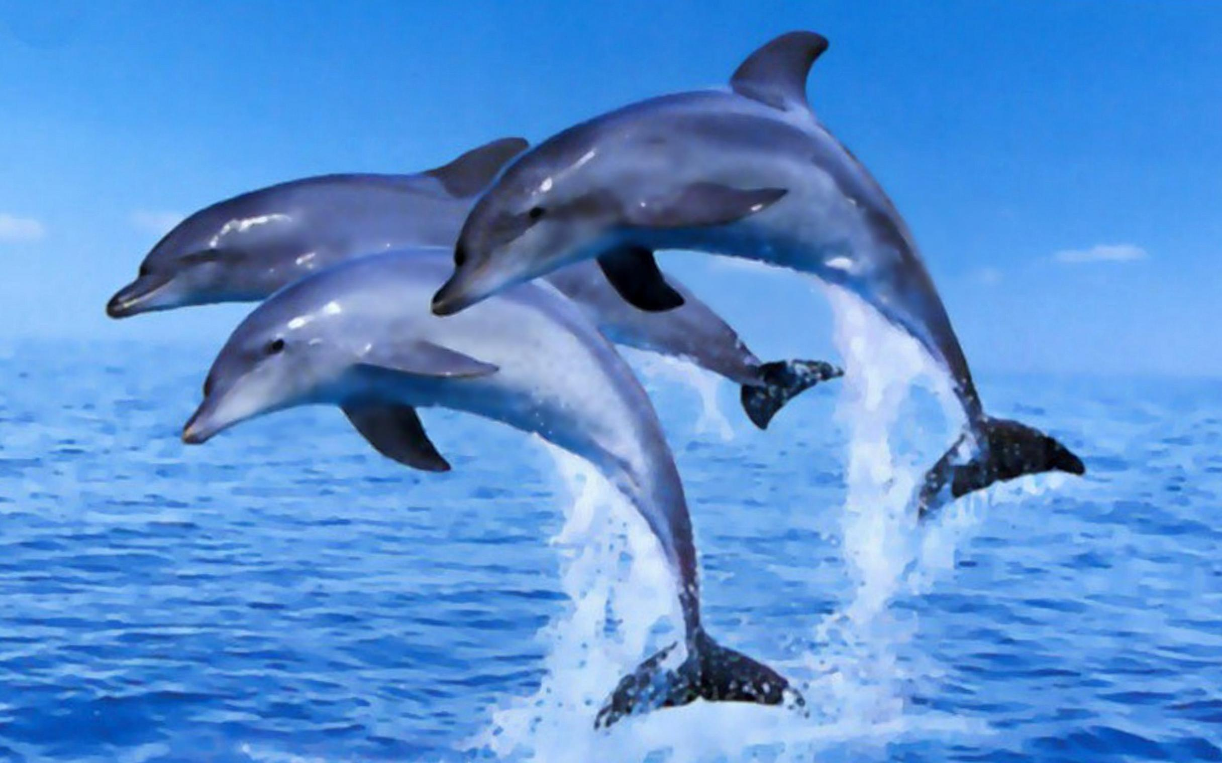 Beached dolphins - photo#40