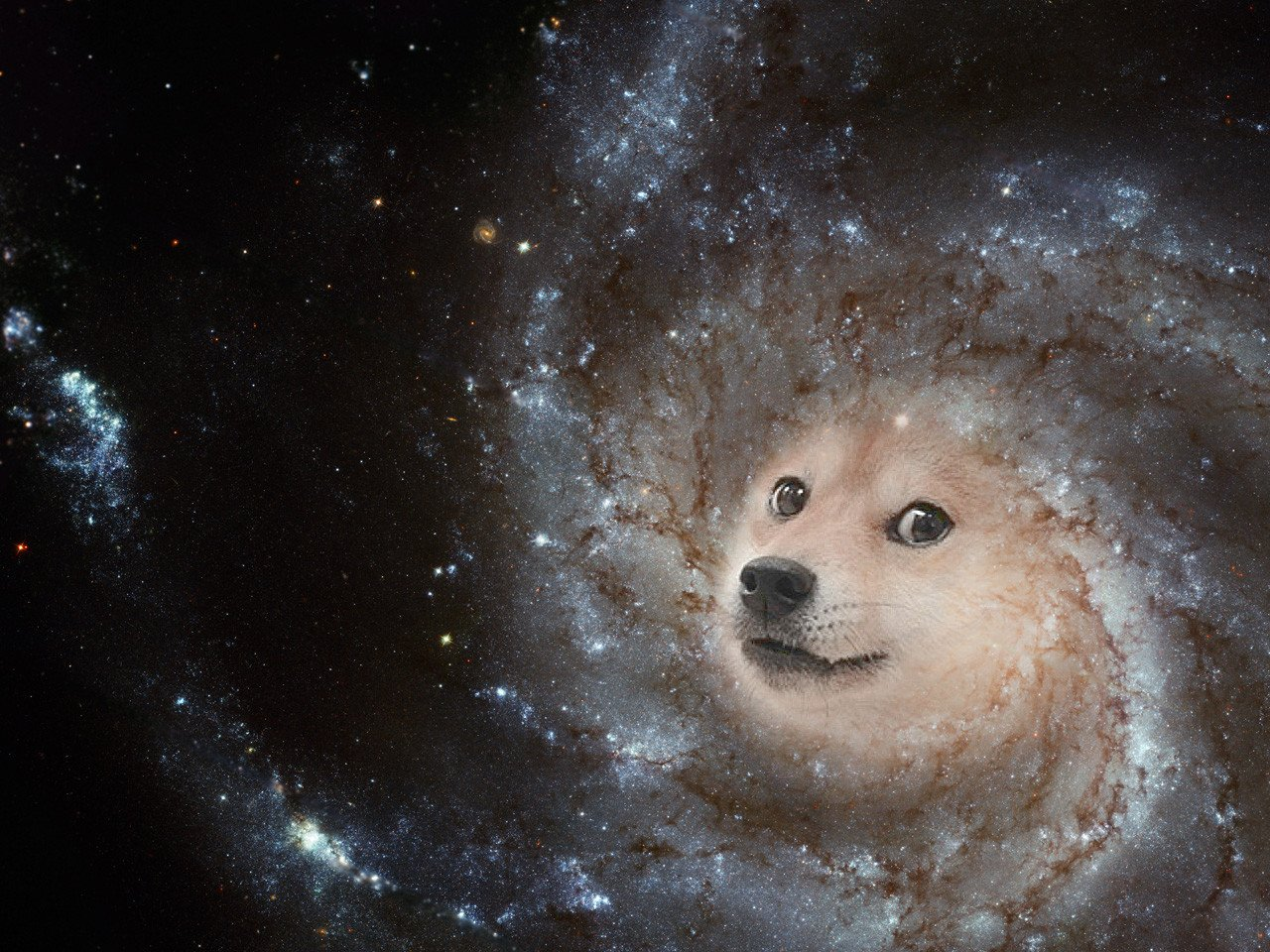 14011 doge in space - photo #5