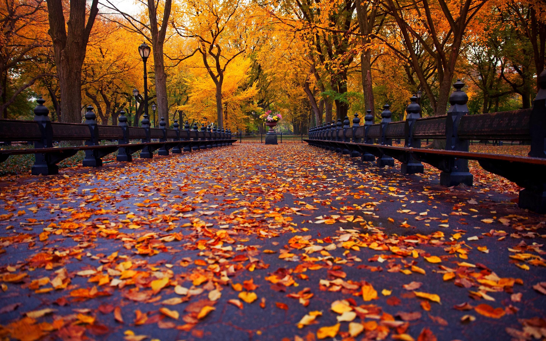 фото воронеж осень