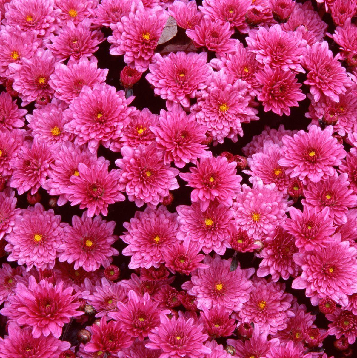 Free Pretty Flower Wallpaper
