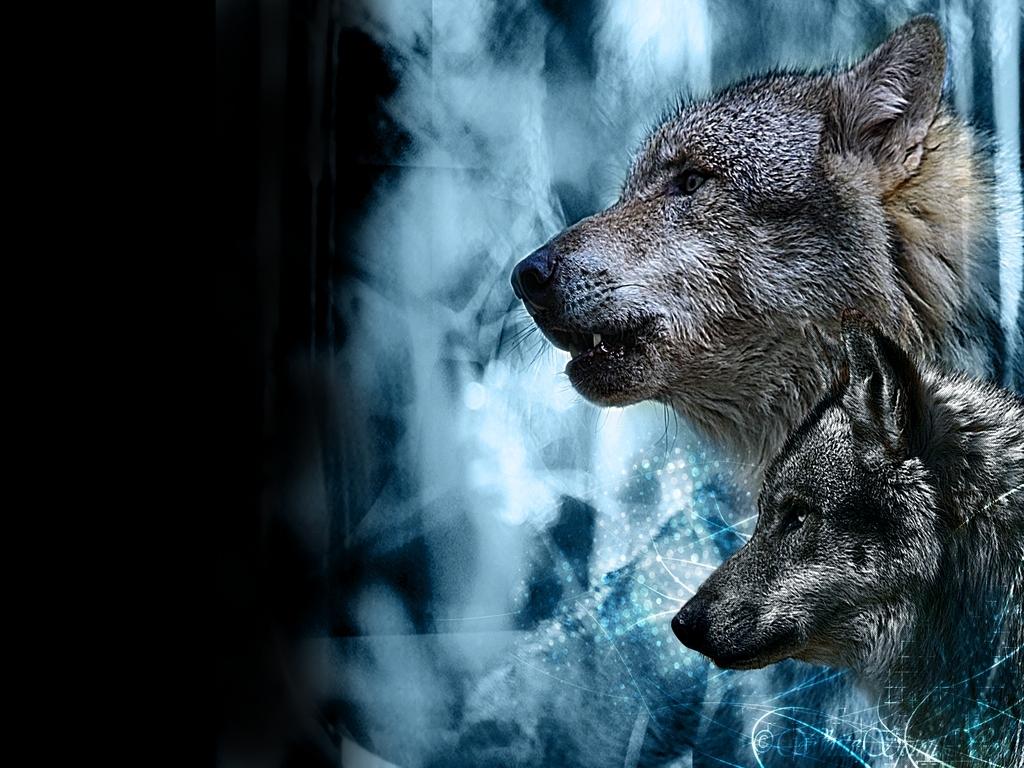 Wolves   Wolves Wallpaper 10291304 1024x768