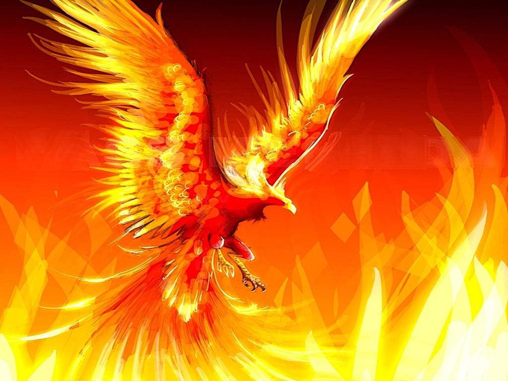 1024x768px Cool Phoenix Wallpaper Wallpapersafari