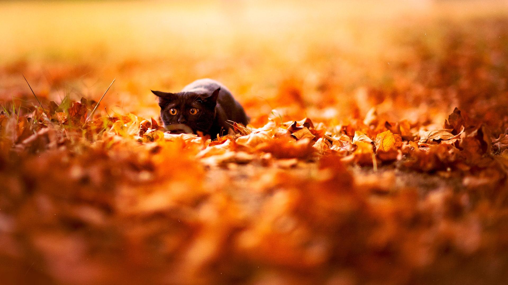 Fall Desktop Wallpaper Hd Autumn leaves 1920x1080