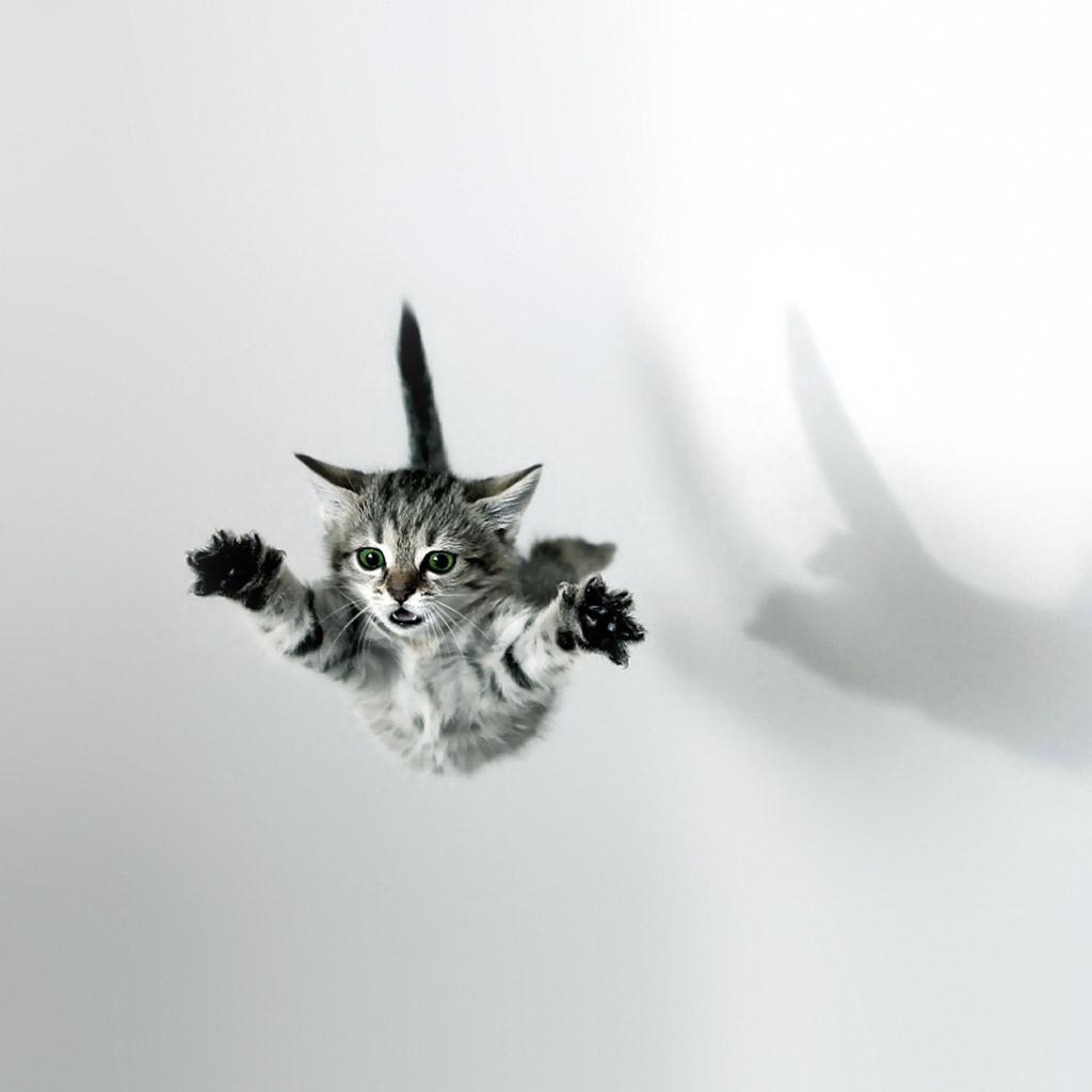 Cat Wallpapers For Iphone: [50+] Funny Cat IPhone Wallpaper On WallpaperSafari