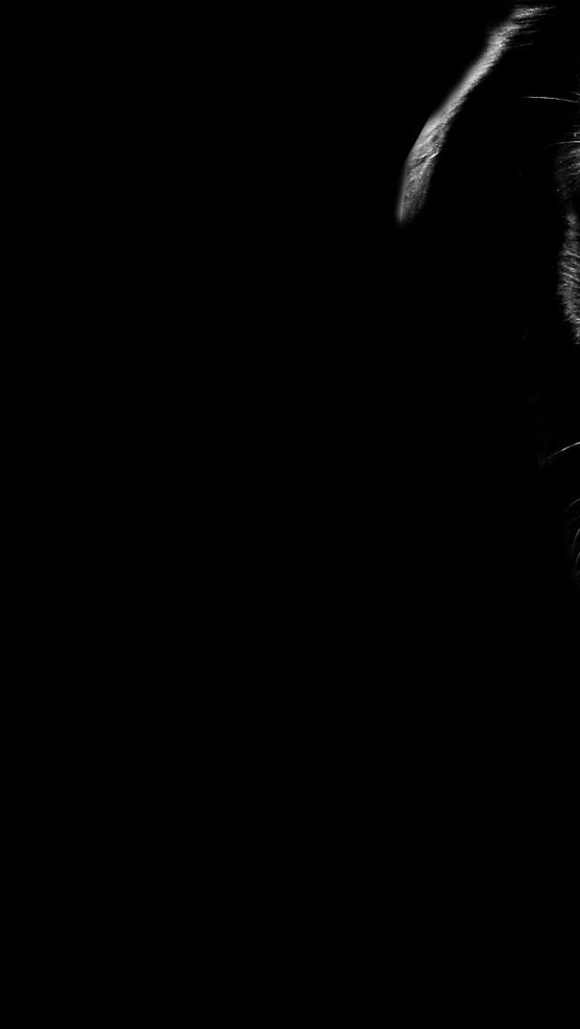 640x1136 Dog Close up Black Tones Iphone 5 wallpaper 640x1136