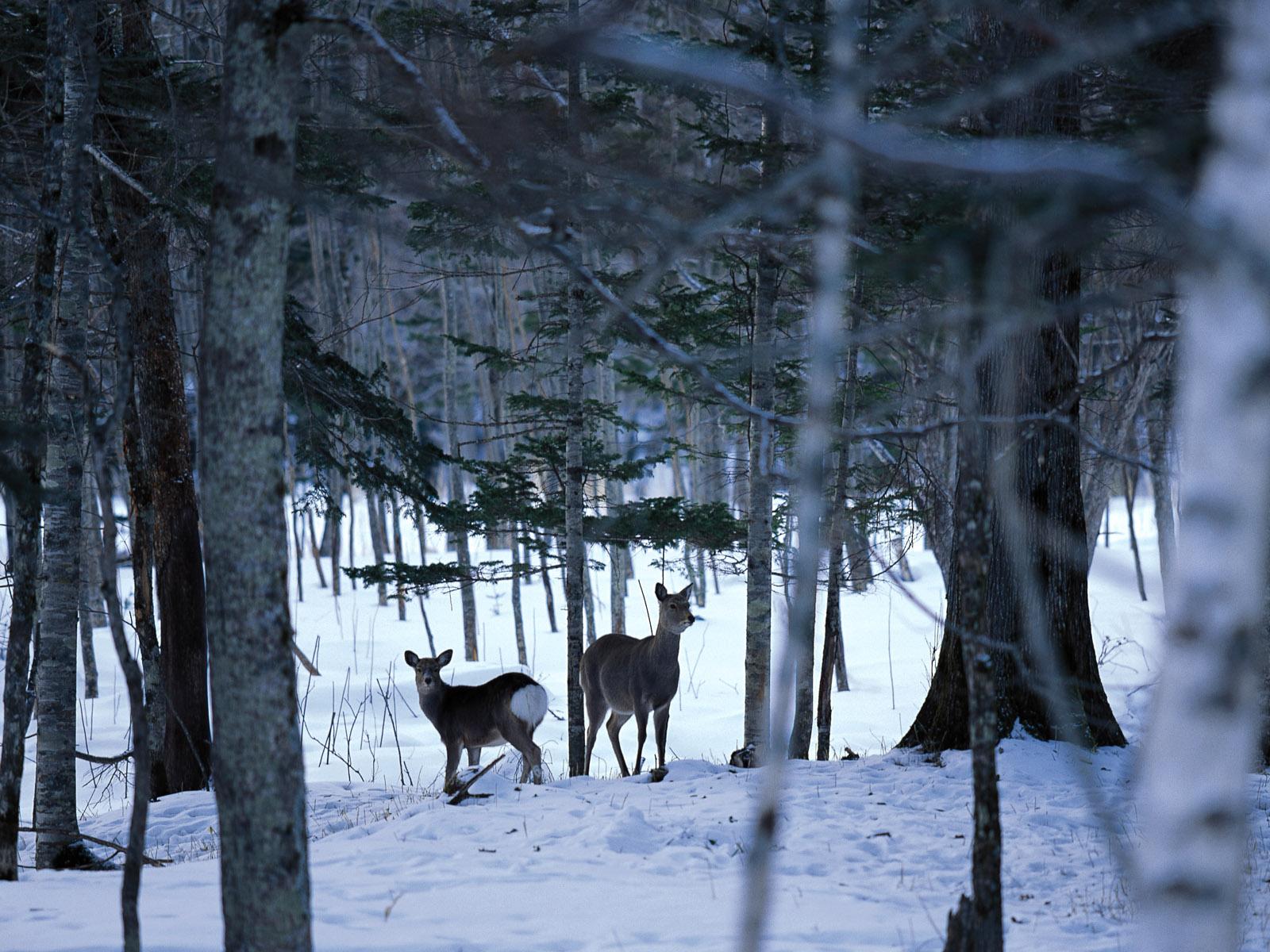 Snow Winter Scene winter snow wallpapers MIL50095 wallcoocomjpg 1600x1200