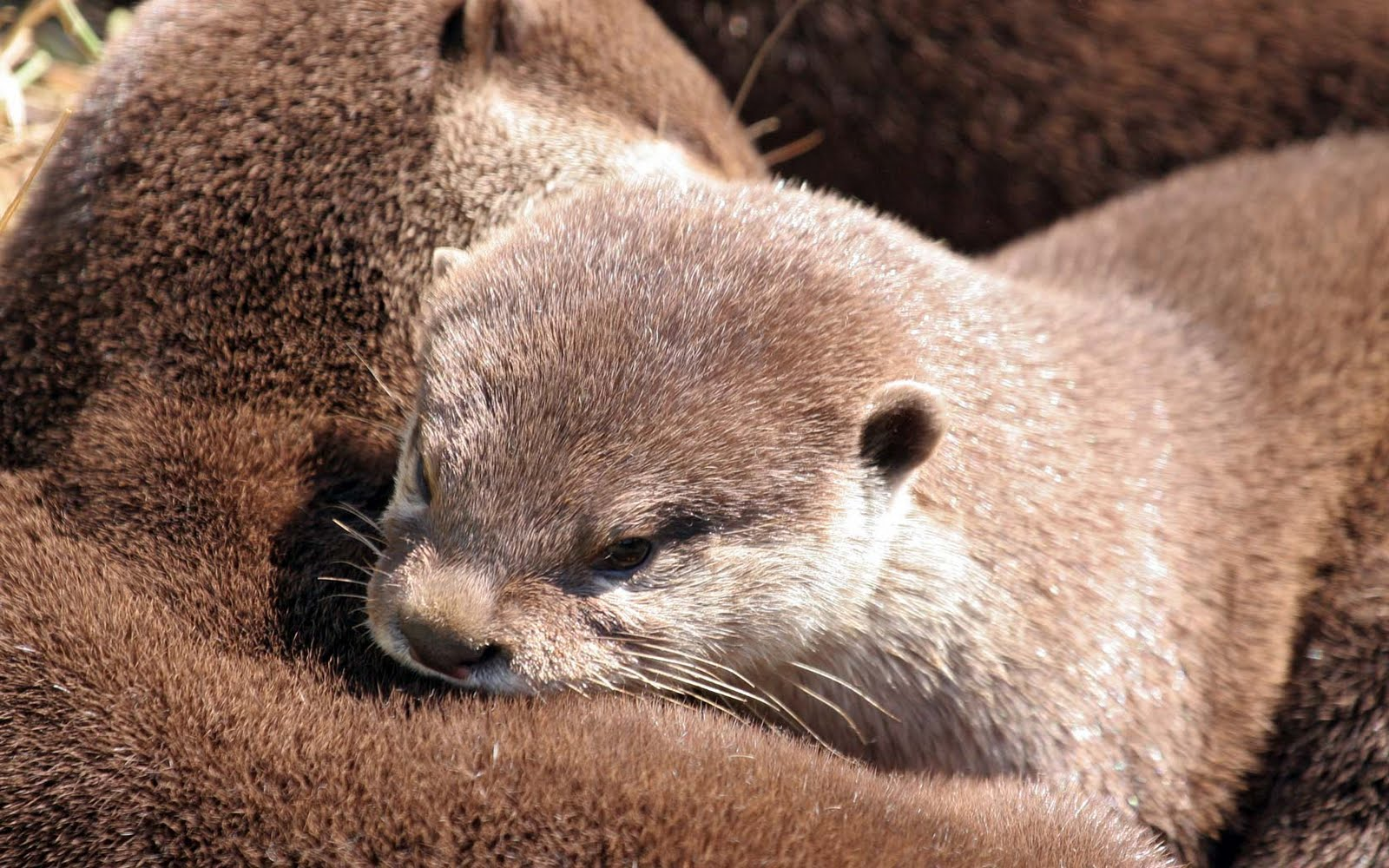 Very Sweet and Cute Animals Funny Otter wallpaper 1600x1000