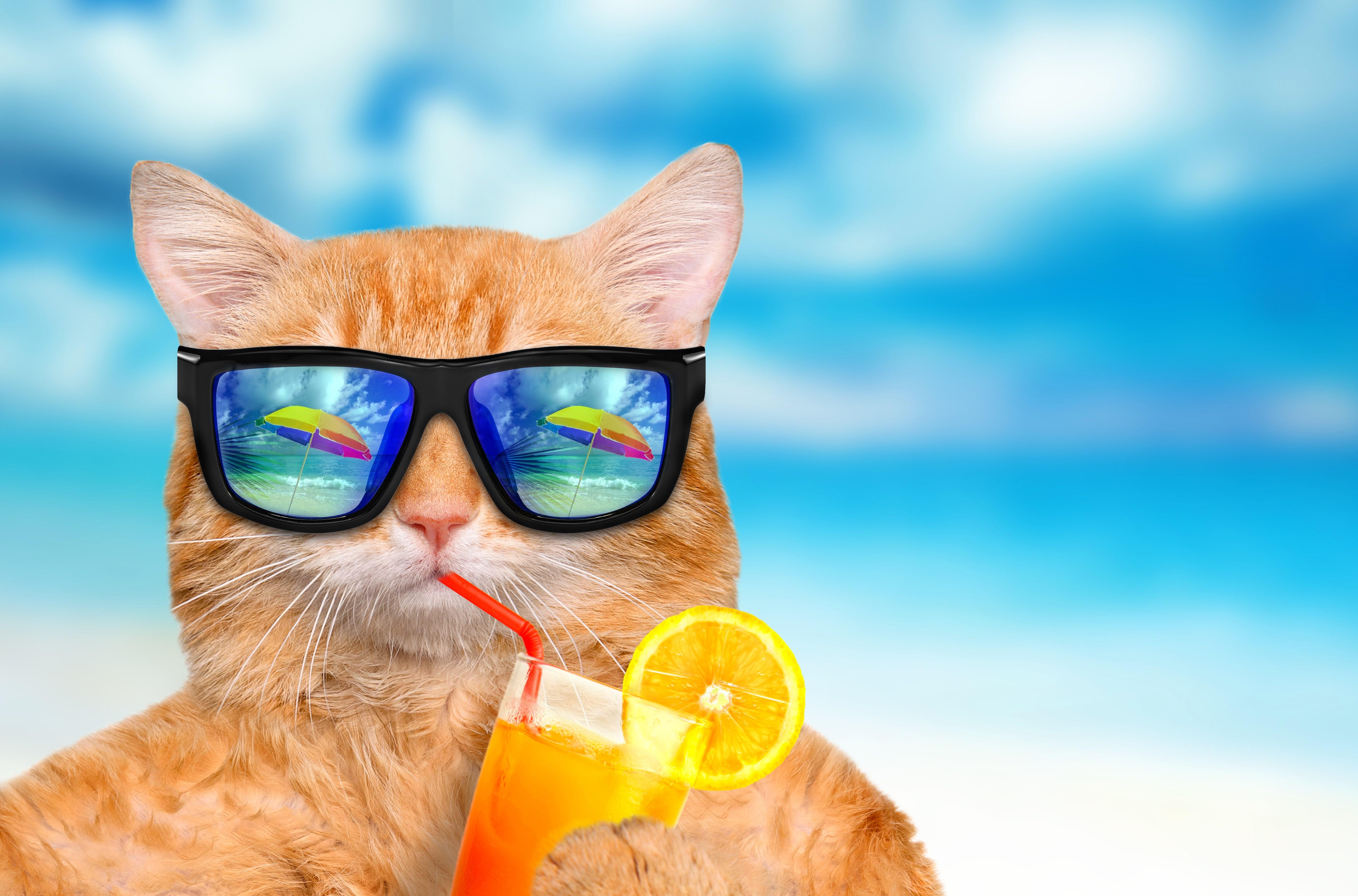 Funny Summer Desktop Wallpaper Pinterest Wallpaper 5735x3786