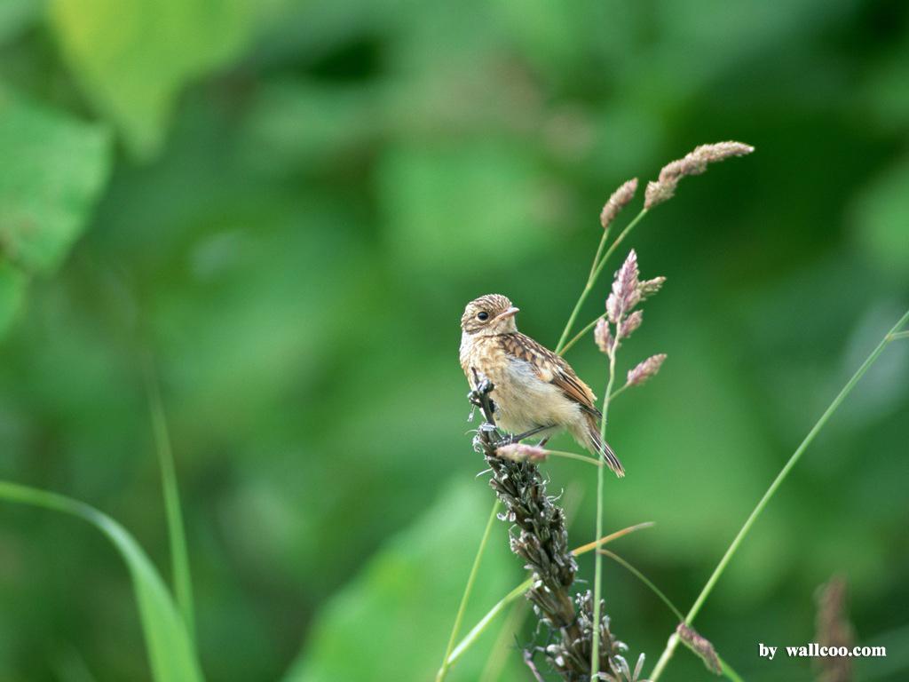 Birds Wallpaper   Lovely Bird in Spring Vol1 1024x768 NO26 Desktop 1024x768