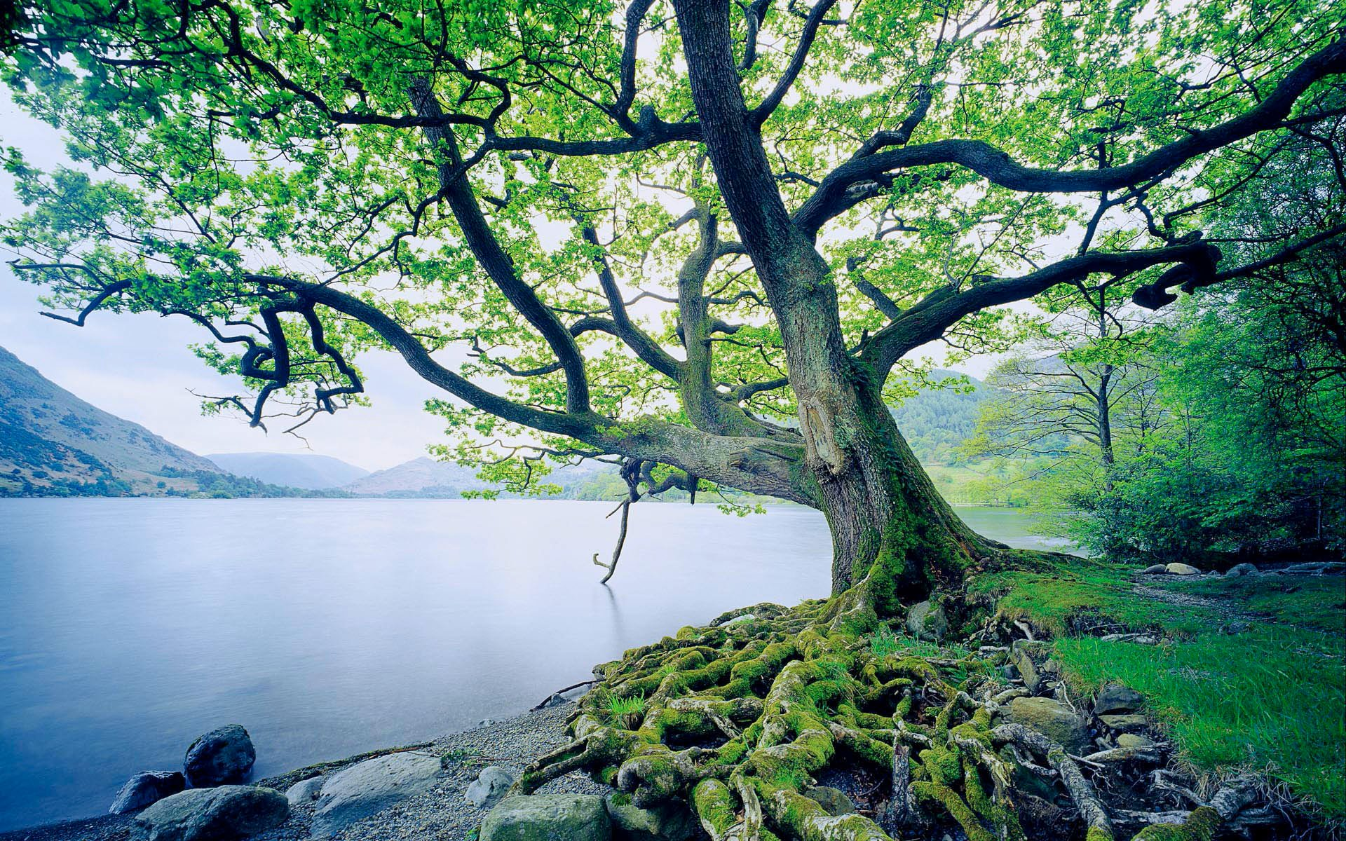 11 Oak Tree HD Wallpapers Backgrounds 1920x1200