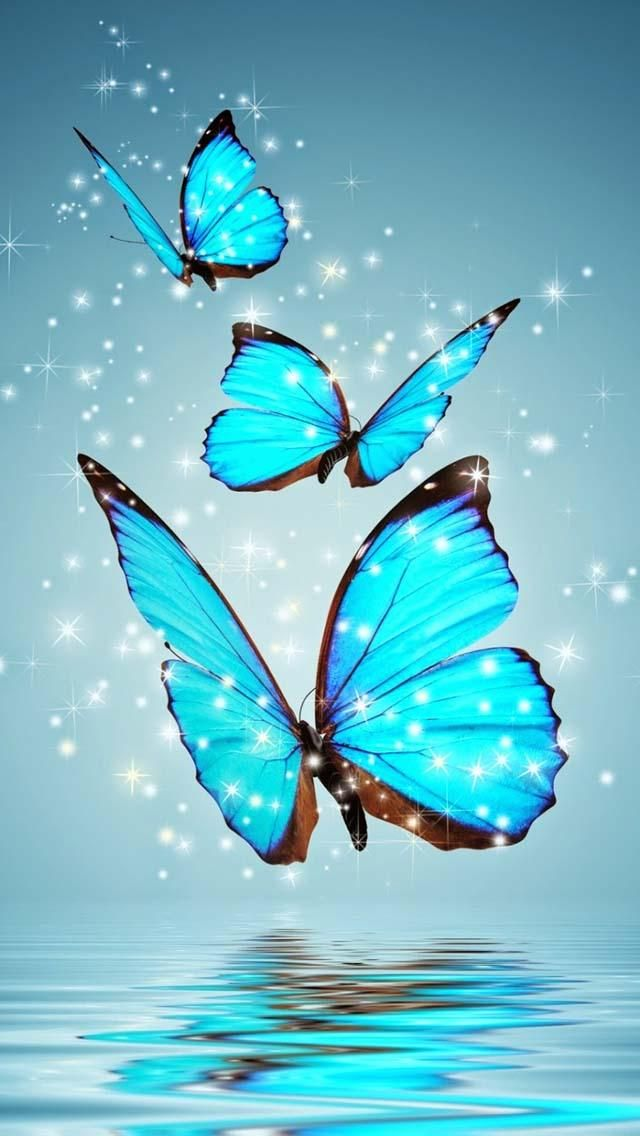 aqua butterfly hd wallpaper Beautiful Wallpaper Butterfly 640x1136