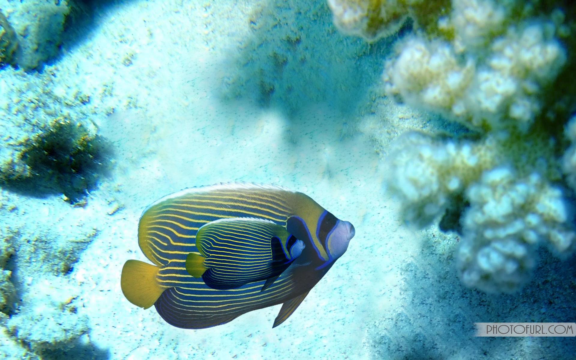 Saltwater fish desktop wallpaper wallpapersafari for Pictures of saltwater fish