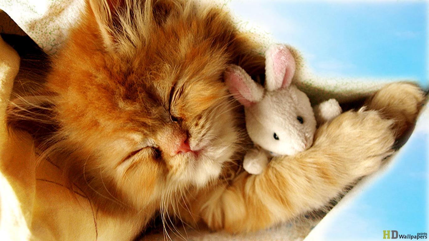 Baby kittens wallpaper wallpapersafari - Cute kittens hd images ...
