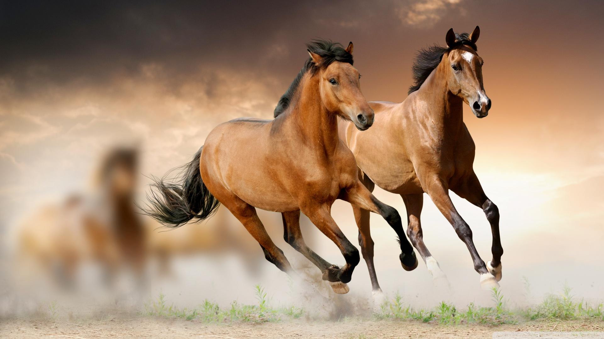 Horses Running 4K HD Desktop Wallpaper for 4K Ultra HD TV 1920x1080