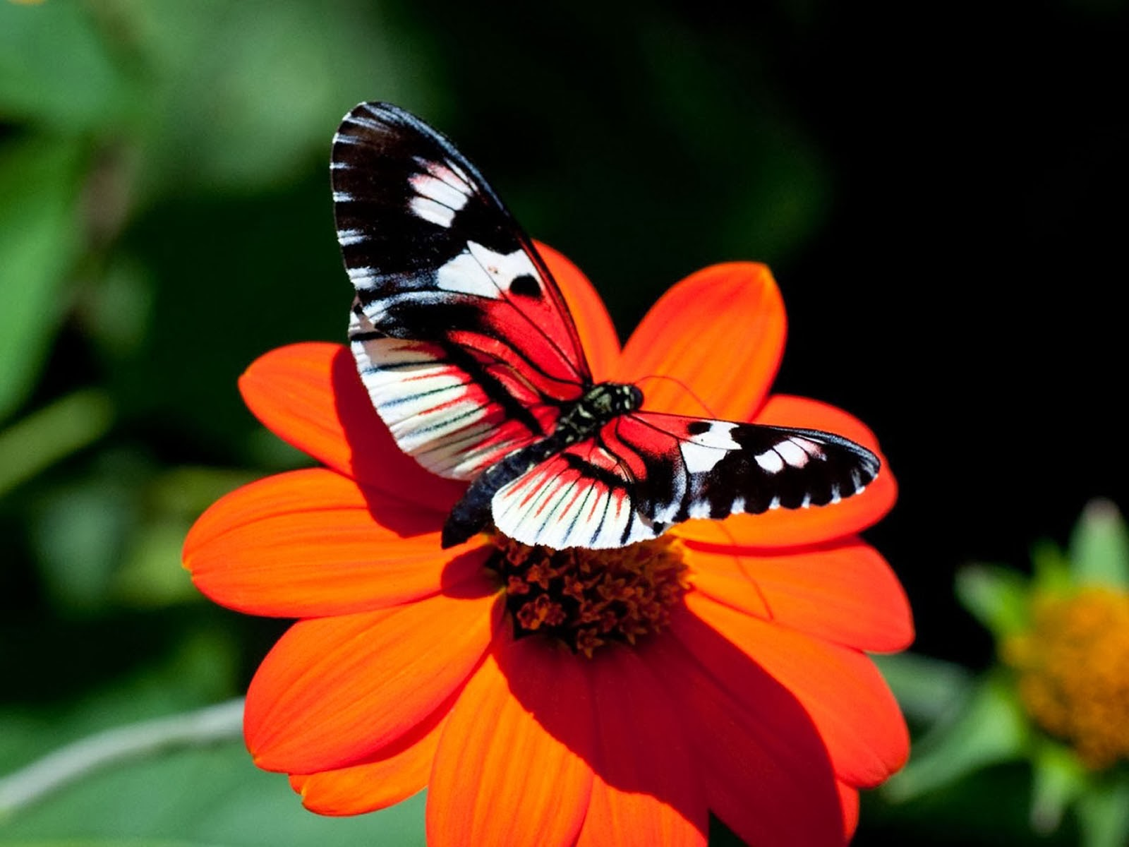 Tag Butterfly Desktop Backgrounds Wallpapers PhotosImages and 1600x1200