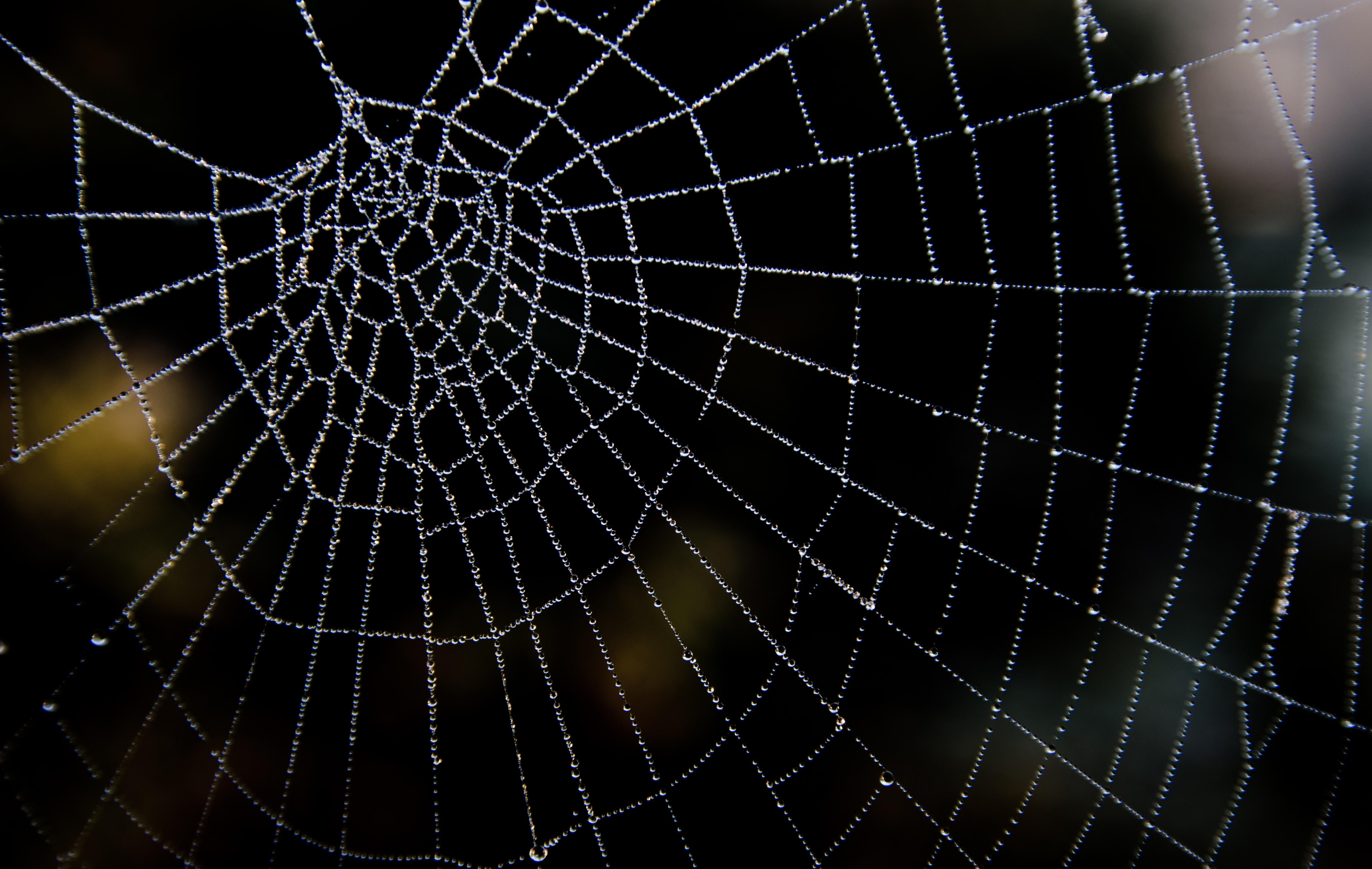 Spider Web Background Images TheCelebrityPix 4918x3117