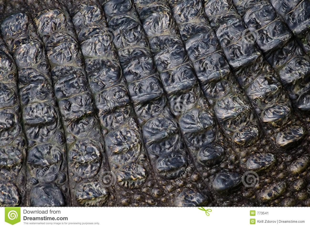 32 Crocodile Skin Wallpapers 1300x956