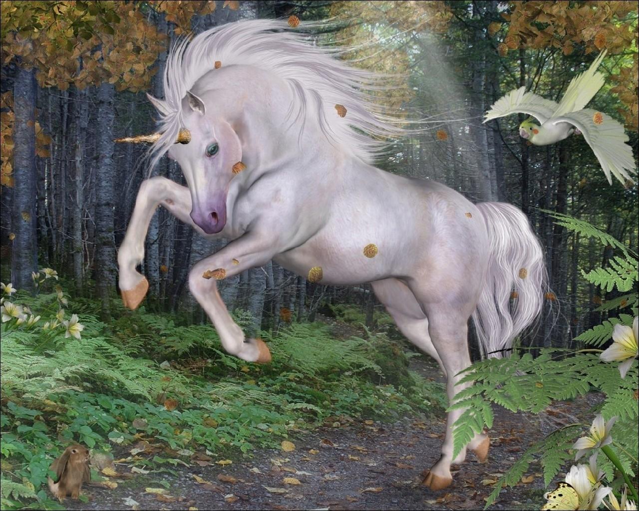 Unicorn Computer Wallpapers Desktop Backgrounds 1280x1024 ID 1280x1024