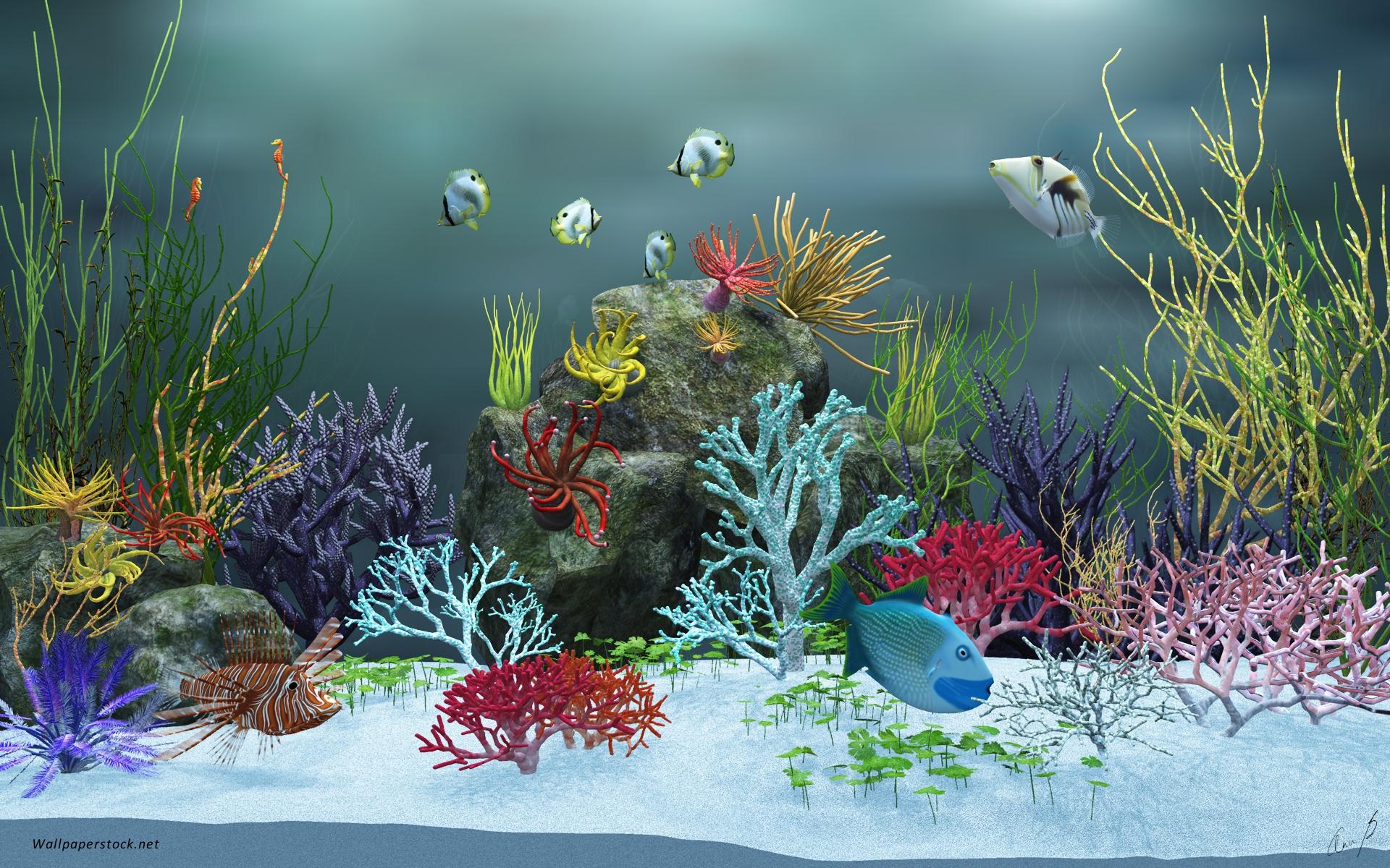 Fish in aquarium desktop wallpaper - 23 Fish Tank Background