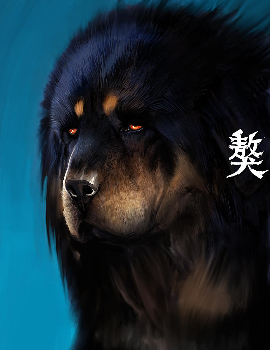 Tibetan Mastiff Exclusive HD Wallpapers 192 924x1200