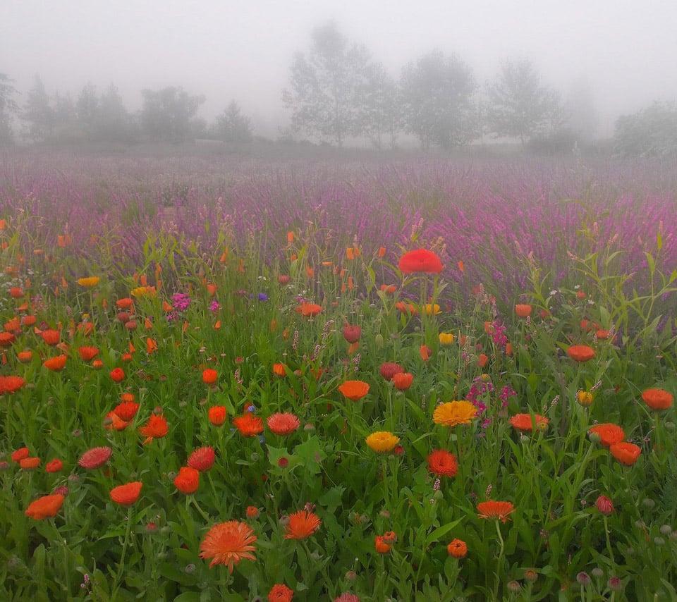 Flower Wallpaper: Beautiful Scenery Wallpaper Flower Wallpapers