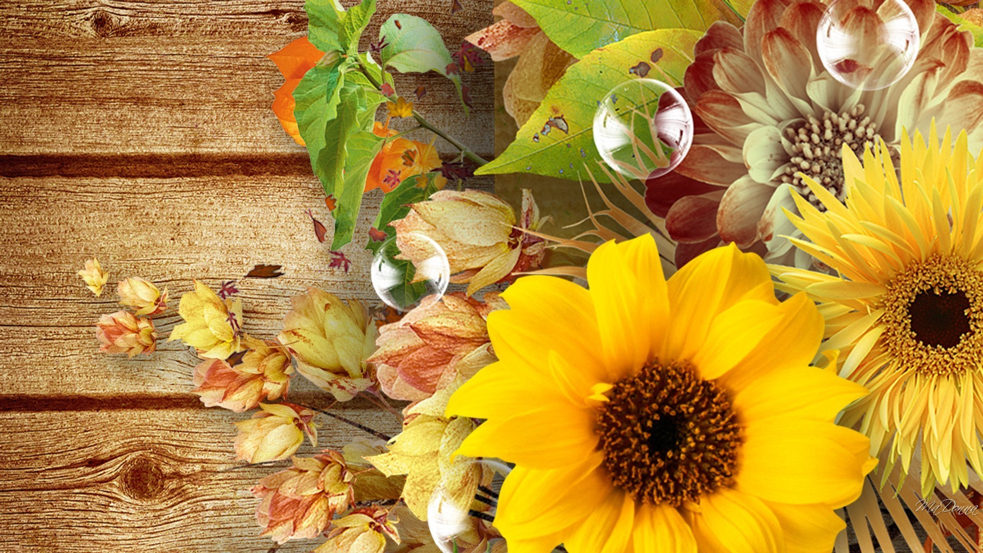 58 Fall Flowers Wallpapers on WallpaperPlay 1920x1080