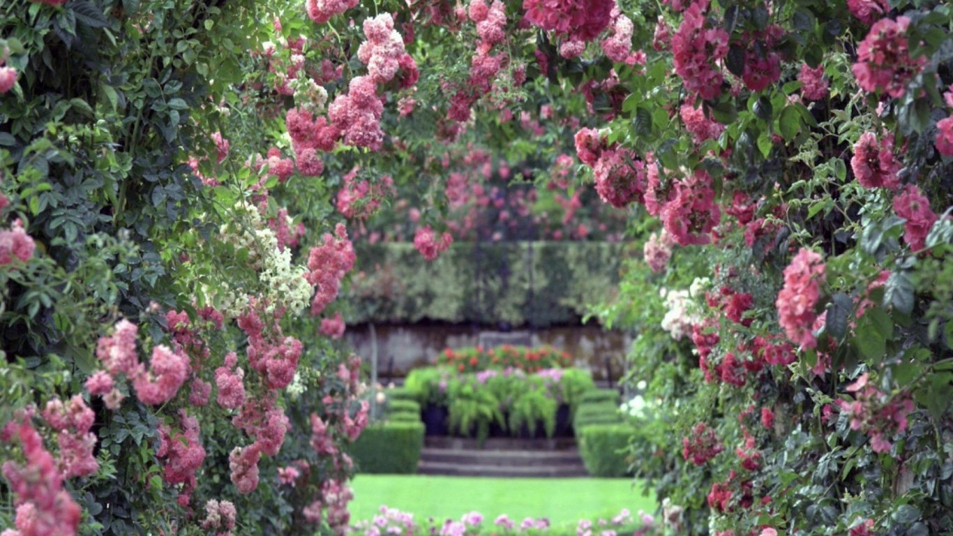 rose garden wallpaper desktop