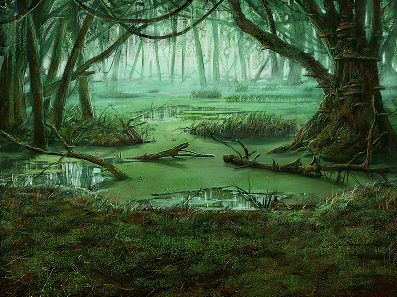 Swamp Computer Wallpapers Desktop Backgrounds 1280x960 ID396788 1280x960