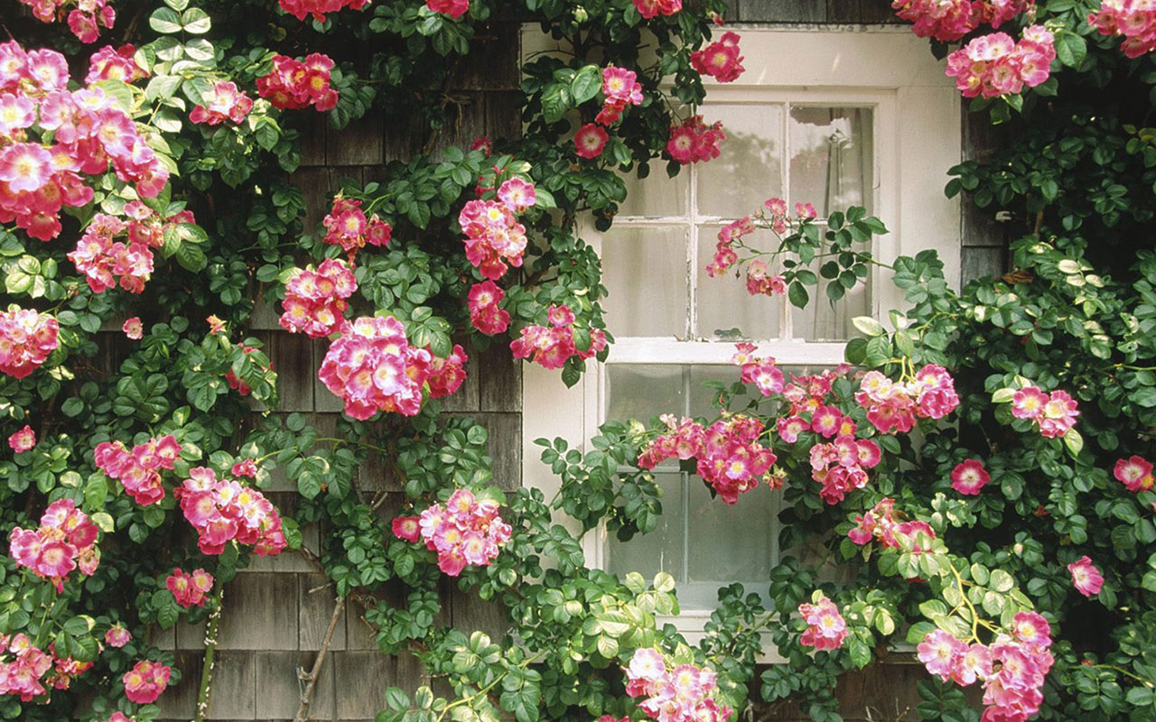 Flowers In The Window Flower Wallpapers Download 1280x800