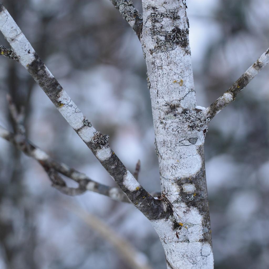 ii freenov winterbay bridge winter ipad wallpapers winter is a 1024x1024