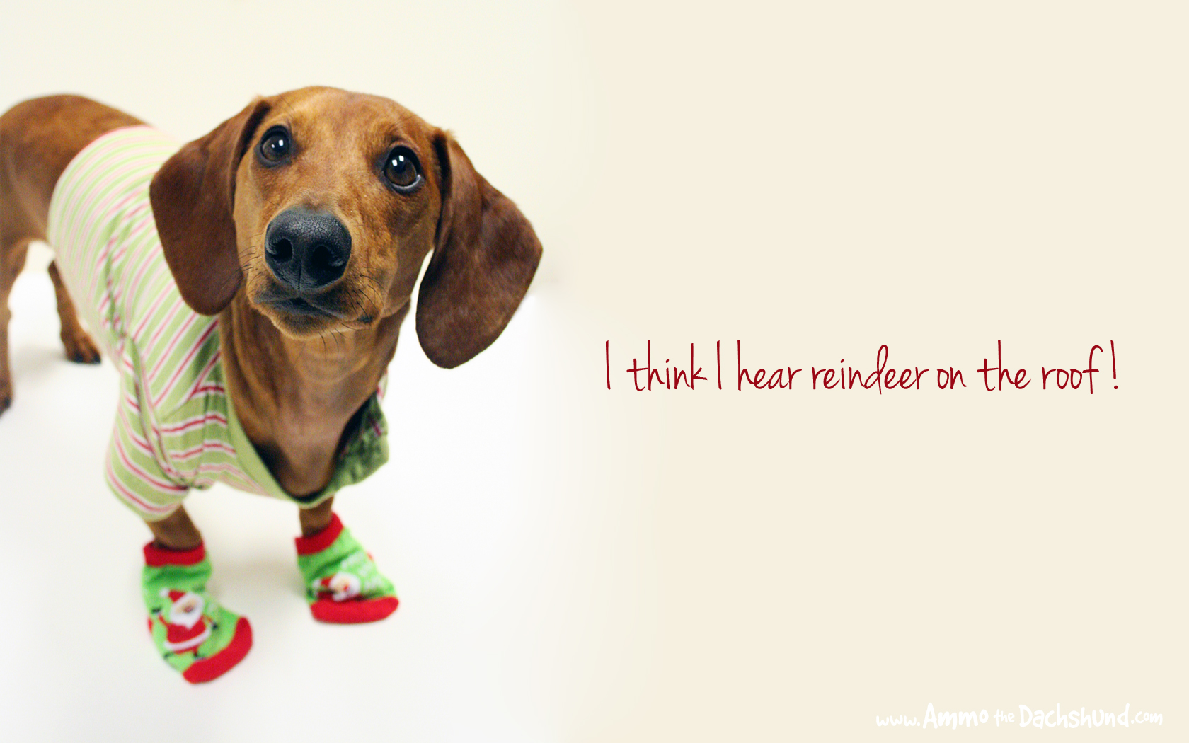 12 Days of Cheer Holiday Desktop Wallpaper Ammo the Dachshund 1680x1050