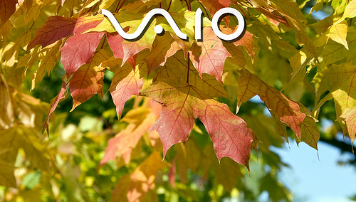 Vaio Leaves Wallpaper 1900 x 1080 Flickr   Photo Sharing 500x284